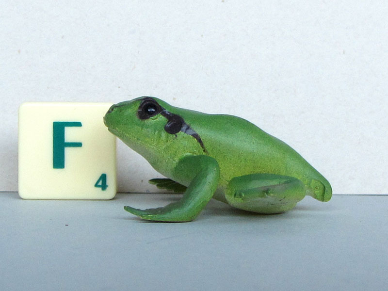 AAA frogs medium lifecycle frogwithtailrest.JPG