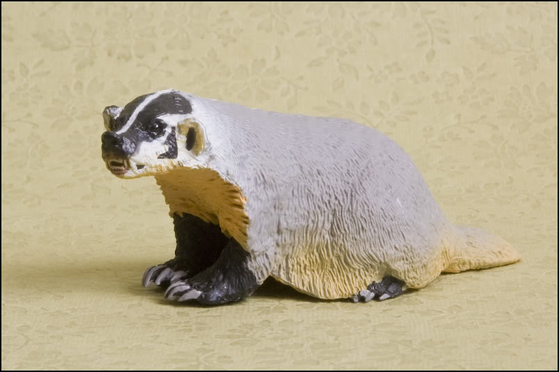 Safari 295429 American Badger 1.jpg
