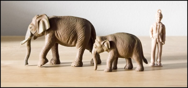 Bandai Asian elephant and calf.jpg