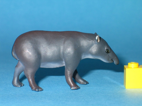 Colorata Neotropical South American tapir 1.JPG